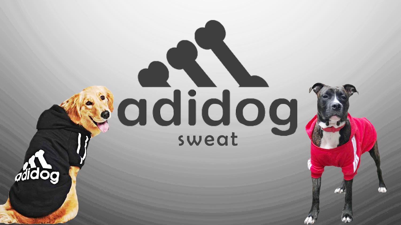 sweat adidas chien