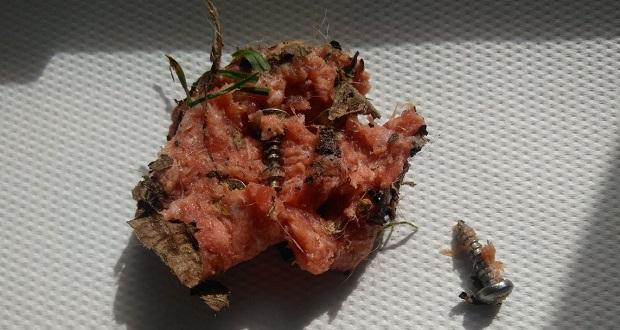 boulette piégée