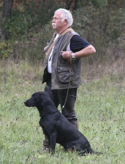 Abattage chiens errants 2