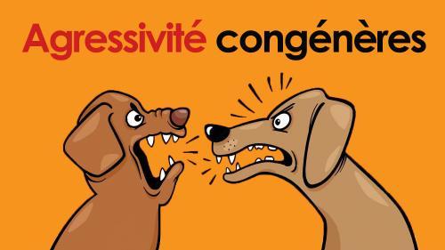 Agressivite congeneres