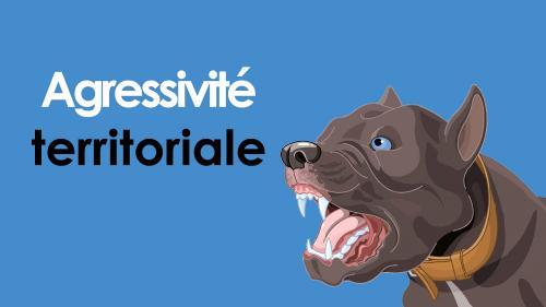 Agressivite territoriale