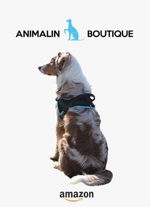 Animalin1
