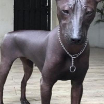 Ce chien est il reel ou s agit il d une statue 2