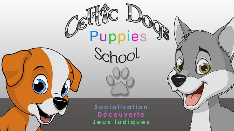 Celtic dogs puppies 1