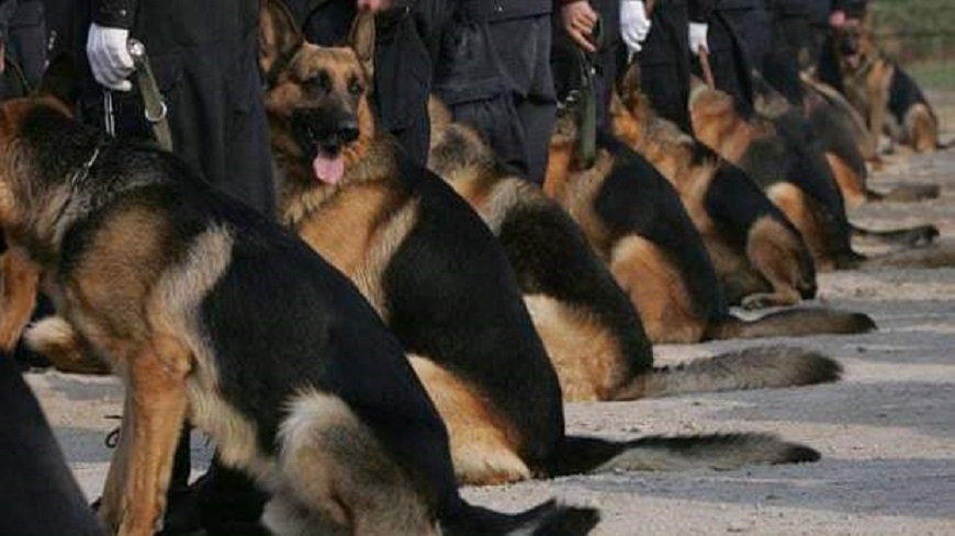 Chiens police 1