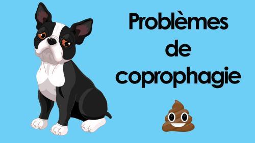Coprophagie