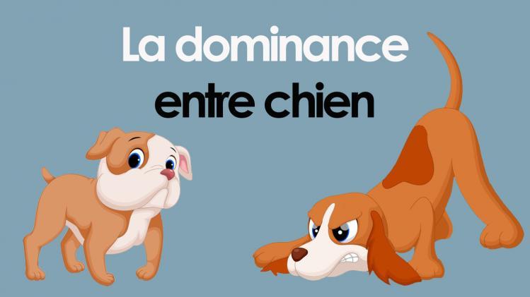 Dominance entre chiens