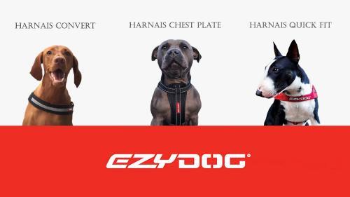 Harnais ezy dog