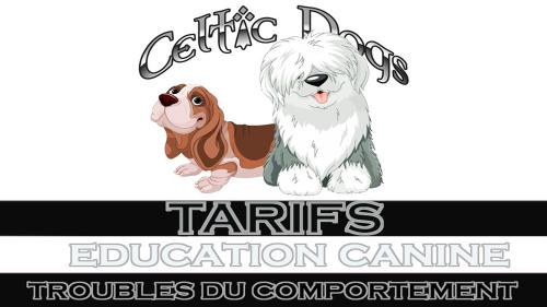 Image presentation articles celtic dogs