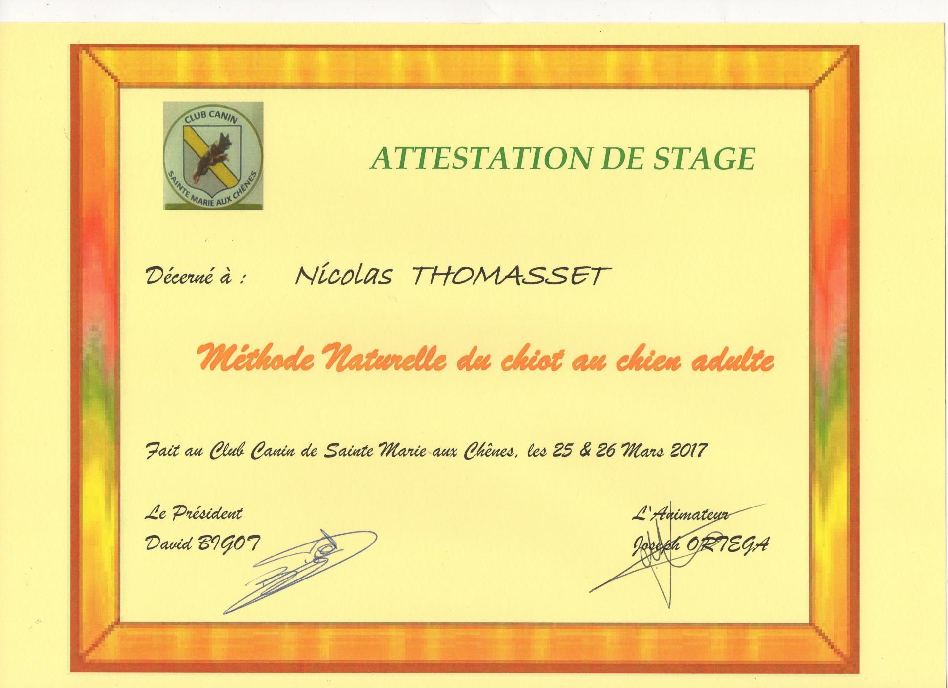 Stage Ecole du chiot