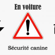 Logo securite auto