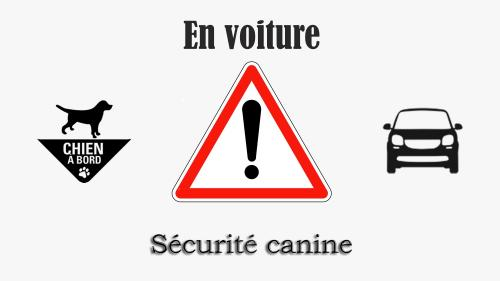 Logo securite auto