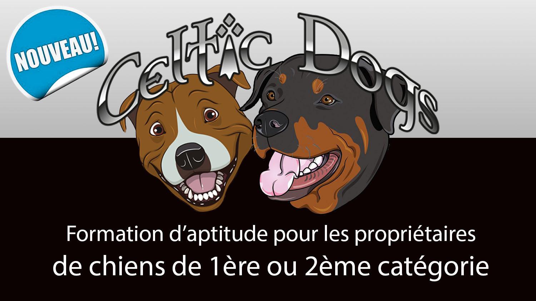 Formation d'aptitude chiens catégorisés